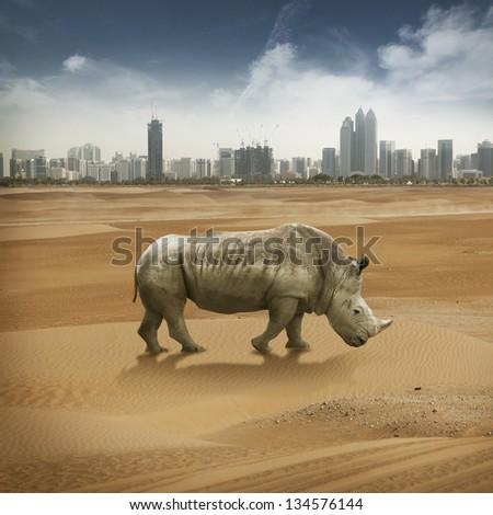 rhino on the desert near big city - stock photo