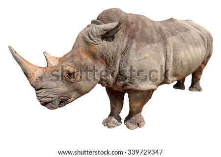 rhino or rhinoceros on white background. This has clipping path.