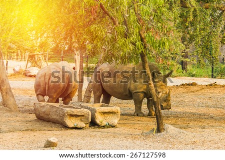 Rhino,Rhinoceros , Vintage filter - stock photo
