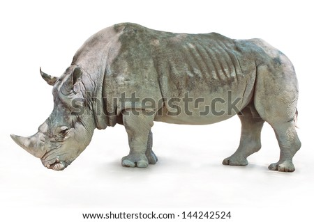 Rhino with rough wrinkled skin standing on a white background