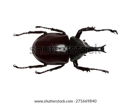Rhinoceros beetle, Rhino beetle, Hercules beetle, Unicorn beetle, Horn beetle isolated on the white background - stock photo