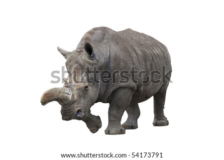 rhinoceros isolated