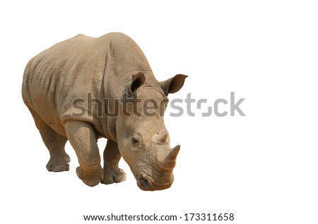 Rhinoceros isolated on a white background, clipping path.