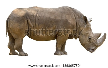 Rhinoceros isolated on white background - stock photo
