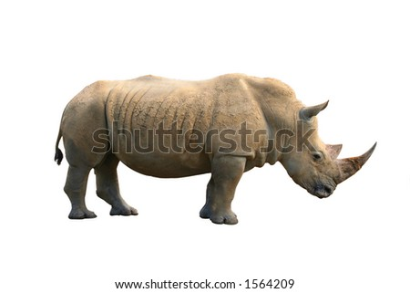 rhinoceros isolated on white background