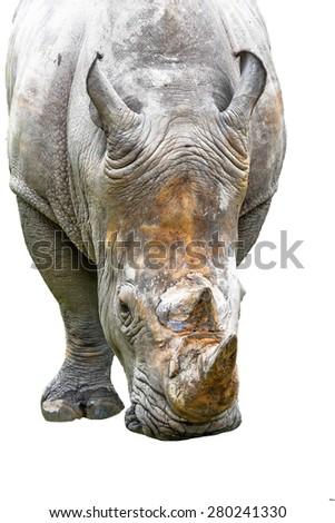 Rhinoceros on white background - stock photo
