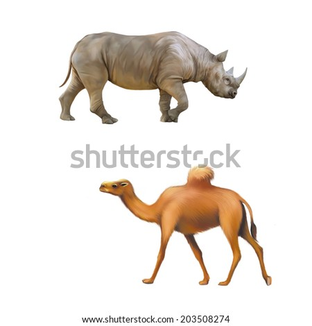 rhinoceros side view, one hooved camel walking isolated on white background