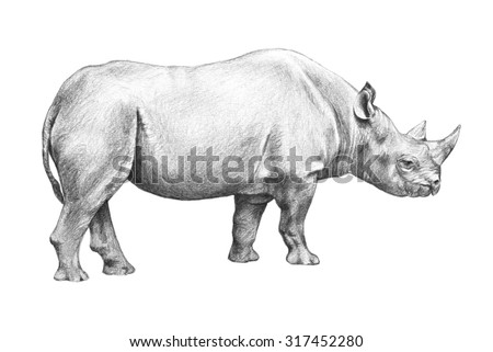 Rhinoceros sketch, hand drawn illustration isolated on white background, huge zoo animal, endangered animal from Africa, large dangerous animal with horns