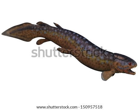 Rhizodus Fish on White - Rhizodus is an extinct group of Carboniferous predatory lobe-finned fishes that lived in freshwater.