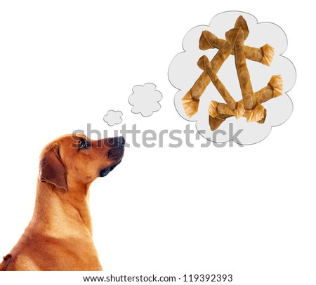 rhodesian ridgeback dreams of dog bones / dog and dog bones