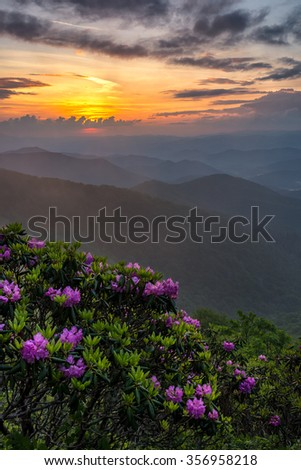 Rhododendron and sunset, North Carolina scenic, Blue Ridge Parkway - stock photo