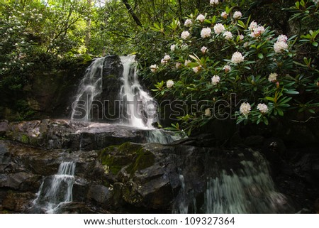 Rhododendron bloom beside a waterfall in the smoky mountains. - stock photo