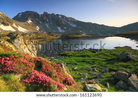 Rhododendron flowers near mountain lake - stock photo