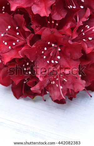 Rhododendron flowers on a wooden board, floral background