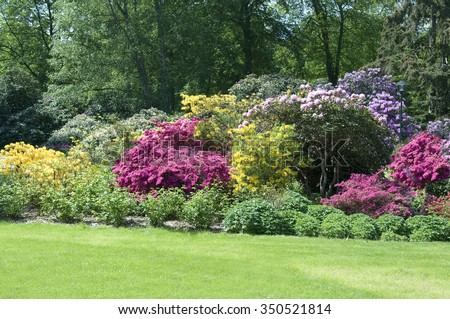 Rhododendron; park; colorful