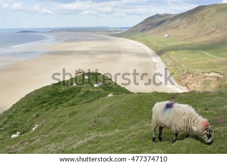 Rhossili Bay with sheep grazing and people on beach. Gower Peninsular, Wales, UK