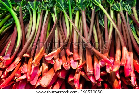 Rhubarb stalks harvested and ready for sale at a farmers market - stock photo