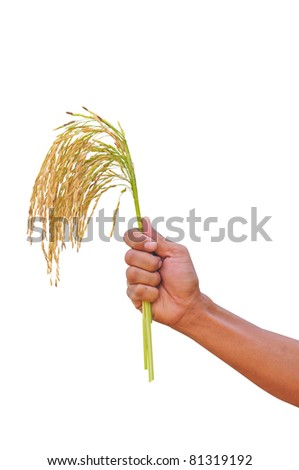 Rice farmers in the hand with clipping path - stock photo