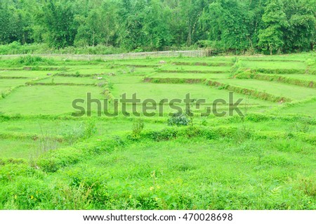 Rice field, Agriculture scene, Thailand