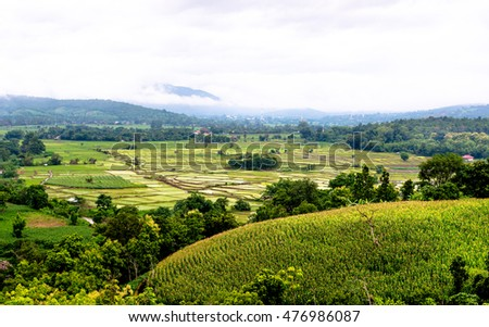 rice field and corn field,Thailand.