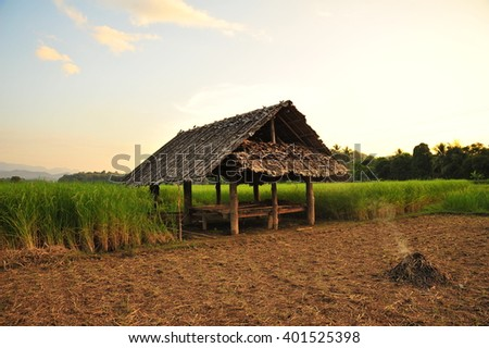 Rice Field and Cottage in Thailand - stock photo