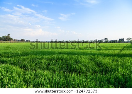 Rice field and farmer hut in countryside of Thailand