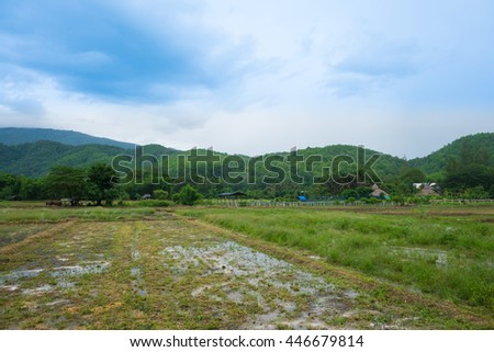 Rice field and green mountain in Thailand