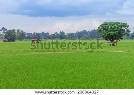 rice field and hut a paddy-field, Chainat in Thailand.