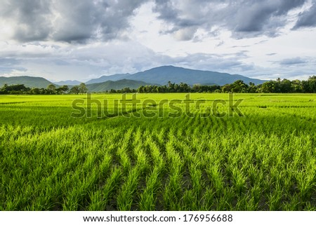 Rice field and mountain - stock photo