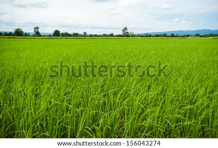 Rice field and mountains, Thailand. - stock photo