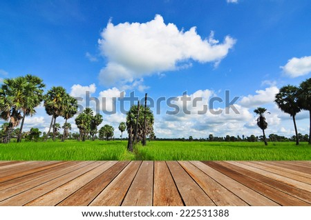 rice field and sugar palm trees under blue sky with wooden plank floor - stock photo