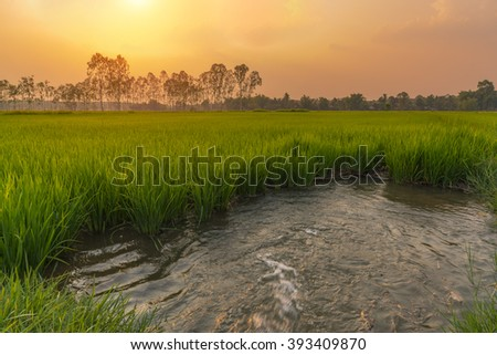 rice field and water flowing,Irrigation water into rice field.with sunset,