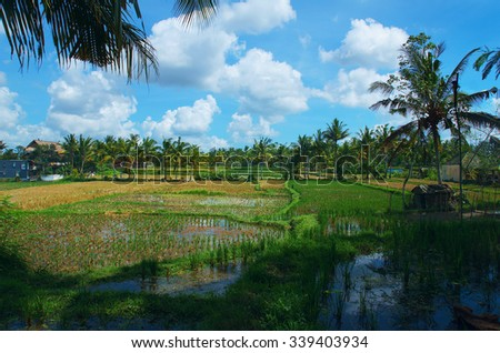 Rice field at the town Ubud in Bali - stock photo