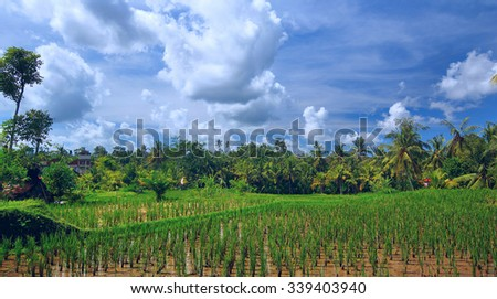 Rice field at town Ubud on Bali - stock photo