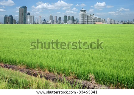 rice field buildings on sky