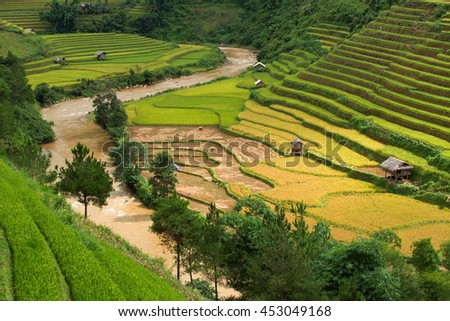 Rice field in Mu Cang Chai Vietnam with little Hut