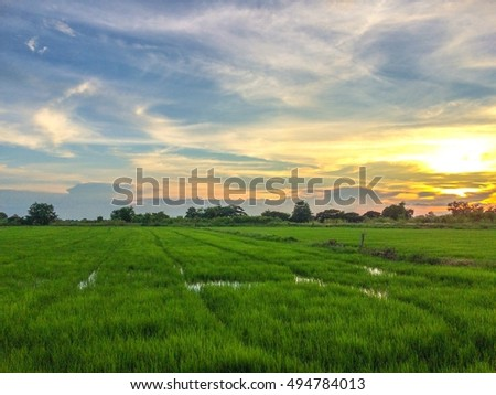 Rice field in Nature background ,landscape
