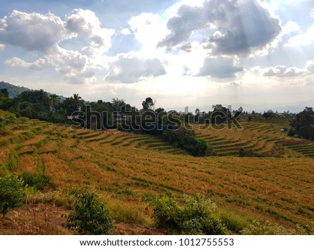 rice field in north of Thailand.