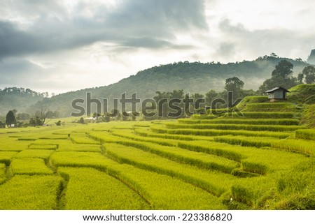 Rice Field in Step Formation in Northern City of Thailand