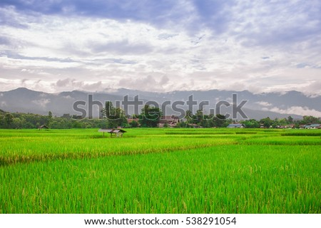 Rice field in the morning with the sun shining through the mountains. Natural light.