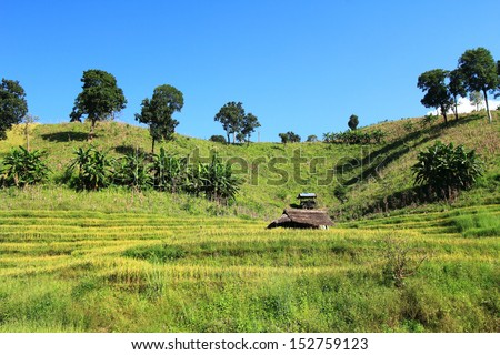 Rice field in the mountains of Thailand.
