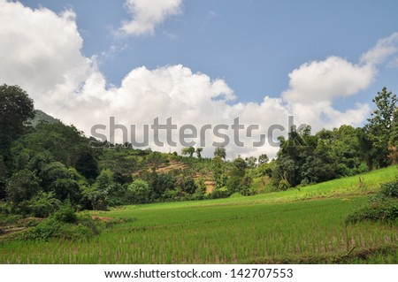 Rice field in the northern of Lao PDR