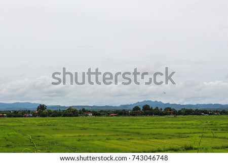 rice field landscape fog mountain nature background