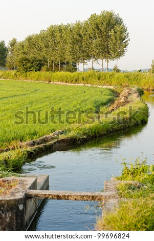 rice field near Tornaco, Piedmont, Italy - stock photo