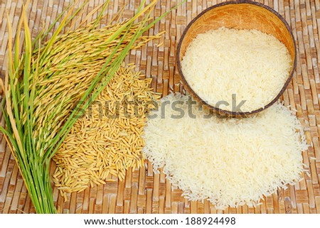 Rice field on bamboo background. - stock photo