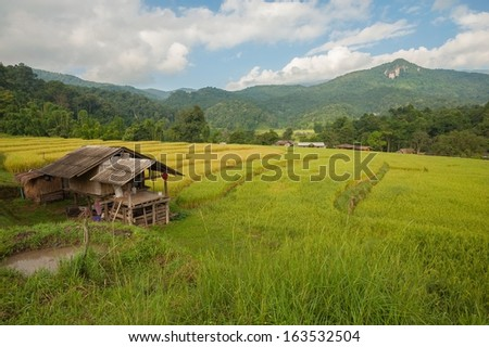 Rice field on steps in Chiang-mai, Thailand.