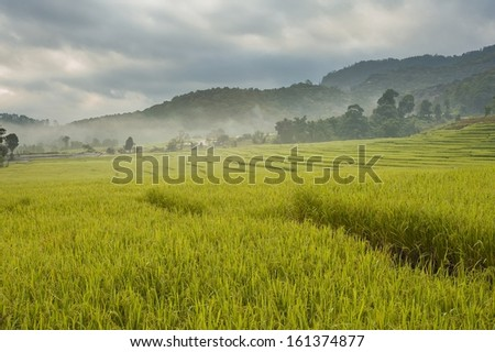 rice field on steps with fog in morning at the northern of Thailand