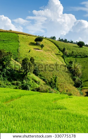 rice field on terraced in nature