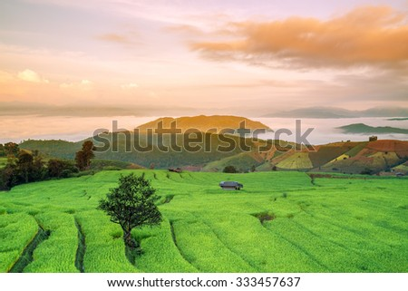 "Rice field on the mountain. ""Pah Pong Piang"" Thailand"