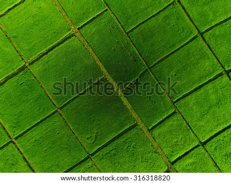 Rice field pattern. - stock photo